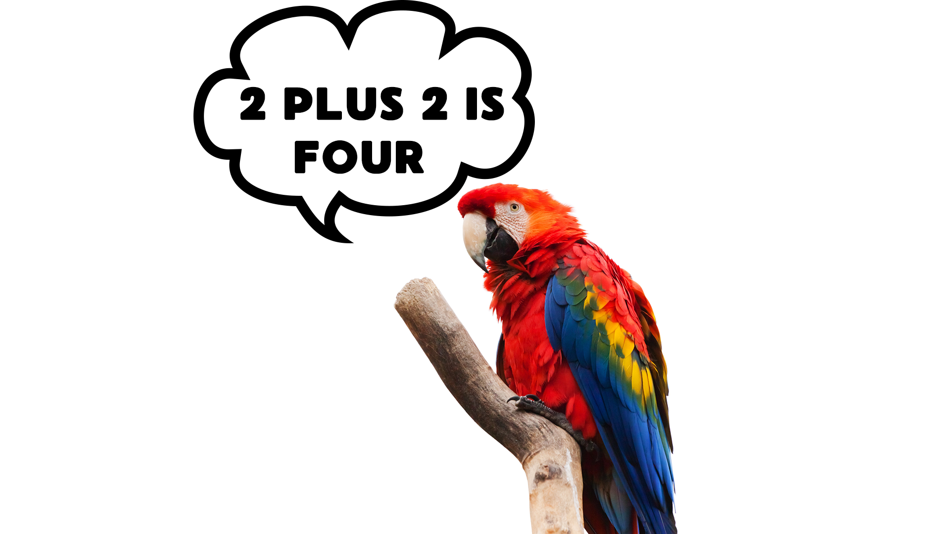 parrots don't fit into the workplace